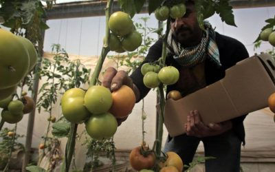 Trade of groceries from Palestine is stopped.